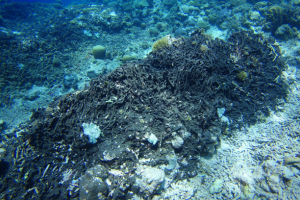 Enhanced monitoring to protect Tubataha Reef seascape needed, says marine scientists