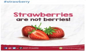 Banana as berry; Strawberry is not actually a berry?