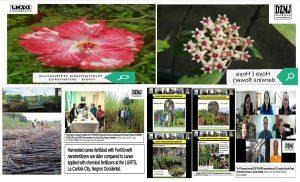 PCAARRD  launched two new ornamental plants breeding of gumamela and Hoya varieties