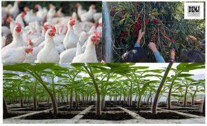 DA to intensify soil rejuvenation program to sustain increased crop productivity