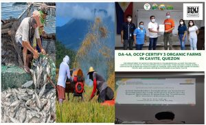 DA-4A, OCCP certify 3 organic farms in Cavite, Quezon