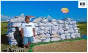 Ilocos farmer leader yields 14.3 MT/ha of Palay in Dry Season
